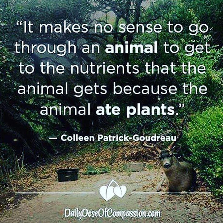 Famous Wildlife Conservation Quotes: 36 Best Vegetarian Images On Pinterest