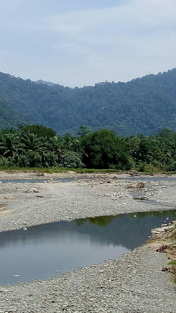 Sky, rainforest, palm oil, river.....