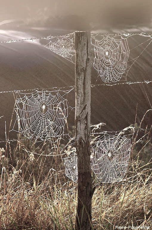 cobweb ... a good luck! .. X ღɱɧღ ||