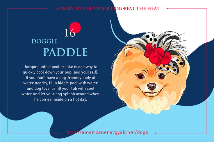 Pomeranians - Tip No. 16 - Doggie Paddle - Jumping into a pool or lake is one way to quickly cool down your pup (and yourself). If you don't have a dog-friendly body of water nearby, fill a kiddie pool with water and dog toys, or fill your tub with cool water and let your dog splash around when he comes inside on a hot day. Check out 15 additional tips at http://americanenergyair.net/dogs