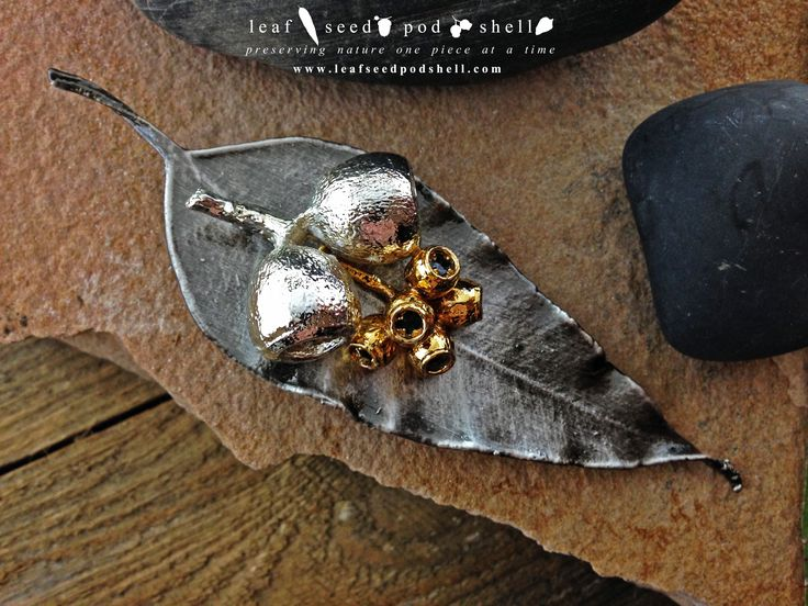 This brooch consists of an antique silver gum leaf with twin gum nuts in bright silver and a gold gum nut cluster.  Available now www.leafseedpodshell.com  #leafseedpodshell #leafseedpodshelljewelry #birdhouse #leaves #leaf #acorn #acorns #seeds #pods #shells #copper #electroform #electroforming #electroformed #electroplated #electroplating #crystal #crystals #rustic #plating #jewelry #jewellery #pendant #pendants #handmade #handmadejewelry