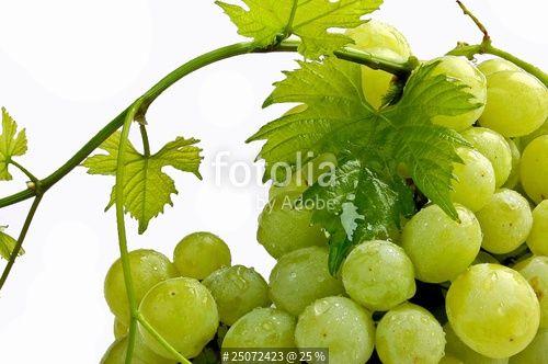 """""""Weintrauben"""" Stockfotos und lizenzfreie Bilder auf Fotolia.com - Bild 25072423"""