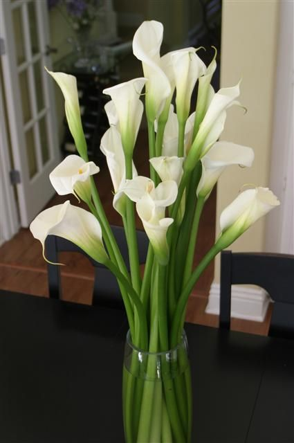 calla lilly & peacock feather centerpieces | Beautiful Tall Calla Lilies Centerpieces features 15 calla lilies. Add orchids, peacock feathers, and branches.