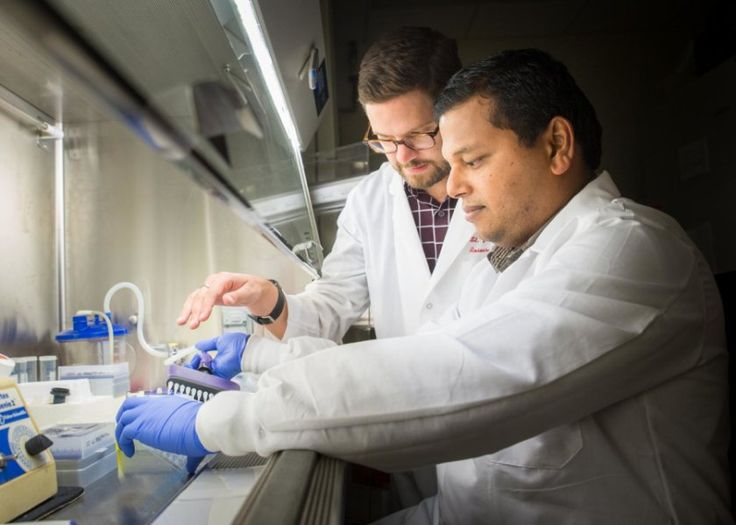Medical researchers have developed an algorithm that predicts T cell recognition of antigens and sets the stage to more effectively harness the immune system.