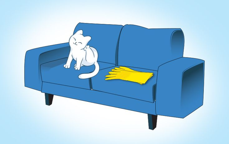 How To Remove Cat Hair From Furniture