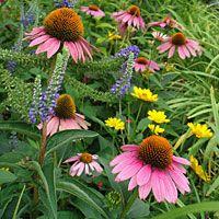 Deer Resistant plants - great list!!