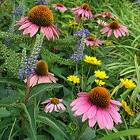 Deer Resistant plants - great list!!