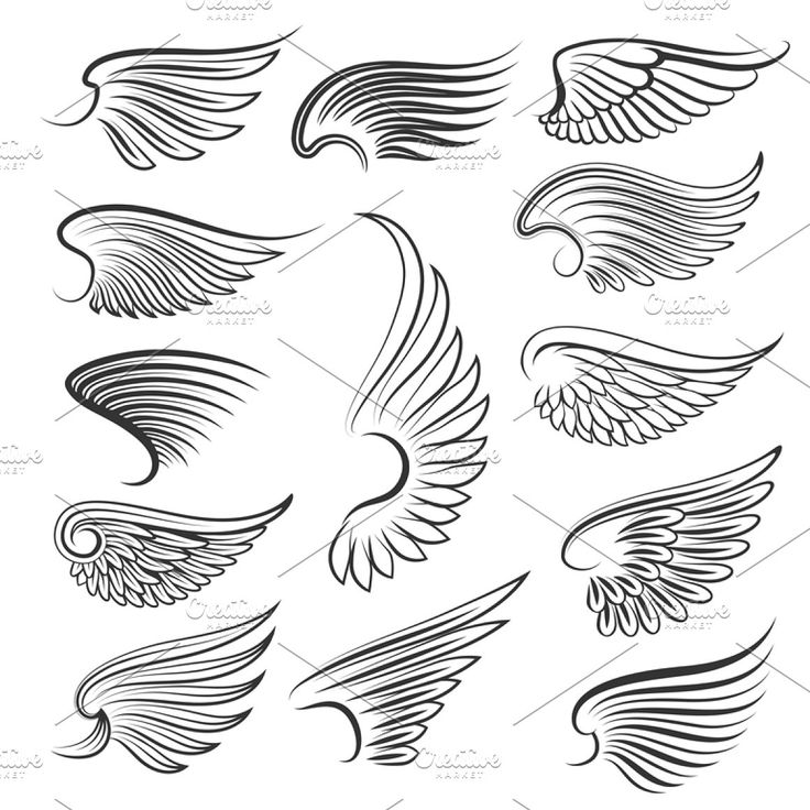 Vintage heraldic wing set wing tribal vintage heraldic cartoon tattoo bird feather vector angel isolated illustration black design graphic element sym…