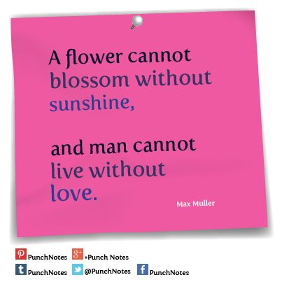 *A flower* A Max Muller love quote.