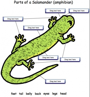 Interactive Science For Smart Notebook Or Smart Express Label The Parts Os A Salamander Available At Www Abcteach Co Interactive Science Interactive Science