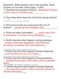 Image result for mitosis worksheet 2 answer key ...