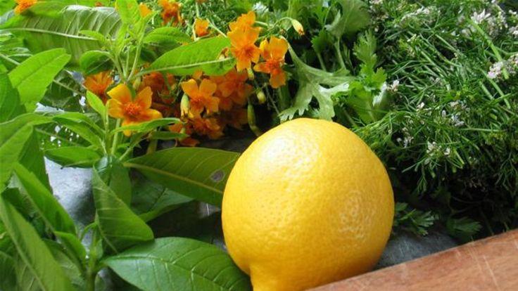 Kryddersalt med friske urter