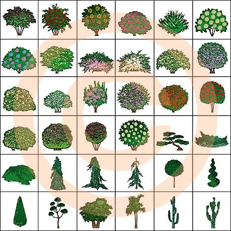 Landscape Design Symbols Ornamental Shrubs Color