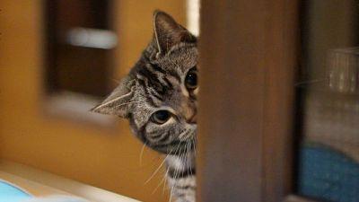 「猫は人に無関心」はウソ、猫の生態を科学するとこうなる - GIGAZINE