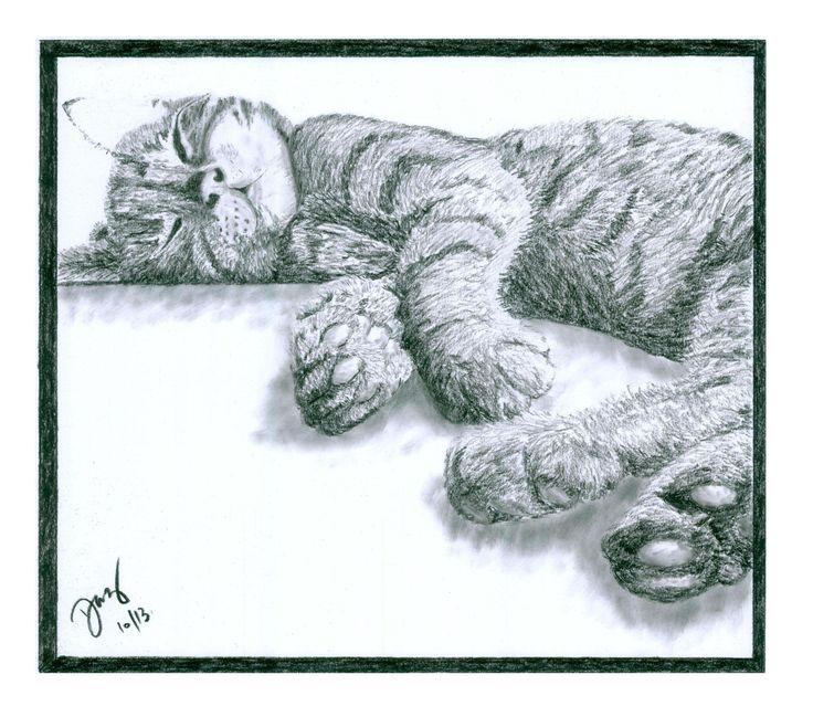 """""""zzzzzzzzz"""" - Billy the cat"""