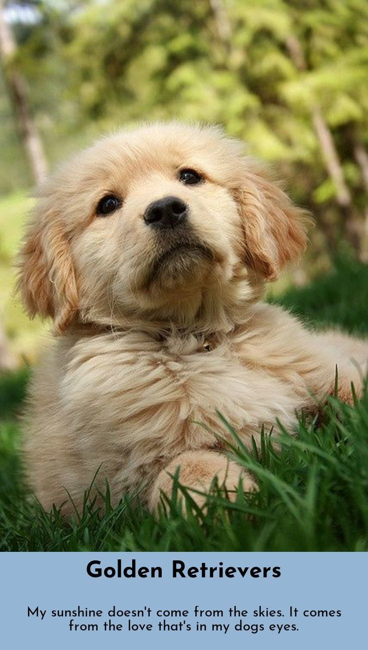 You Can Always Find Hope In A Dog S Eyes Golden Retrievers