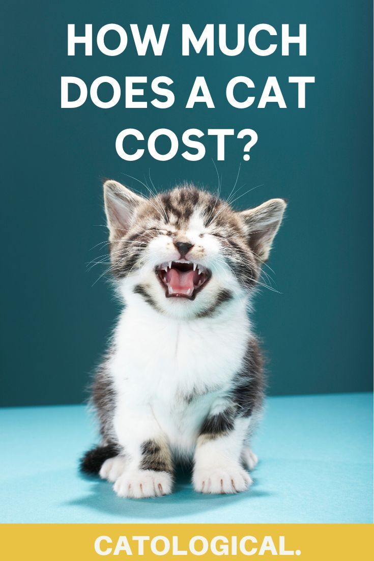 How Much Does A Cat Cost Annual Expenses Revealed In 2020 Disney Pet Names Disney Cat Names Cute Cat Names
