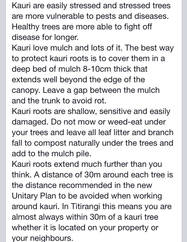 Care of kauri - Titirangi Ratepayers and Residents Association, and Auckland Council, June 2015 (1 of 2)