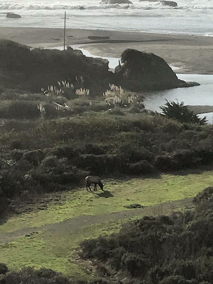 We have an Elk in Elk again