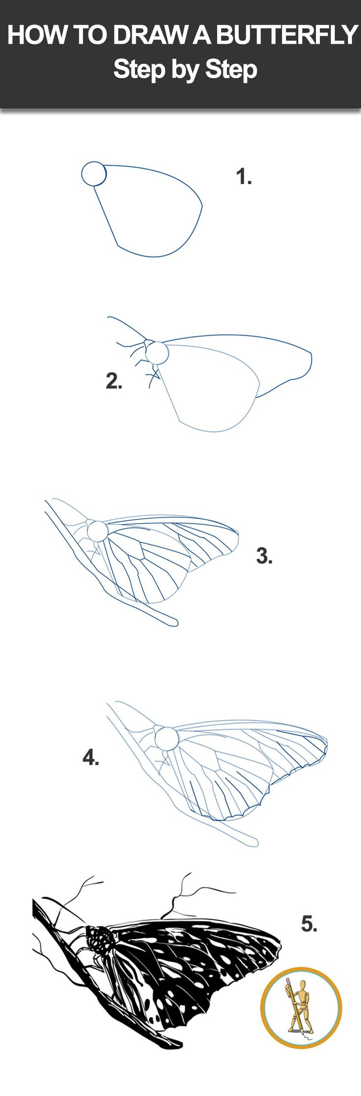 Learn How to Draw a Peacock Butterfly (Butterflies) Step ...