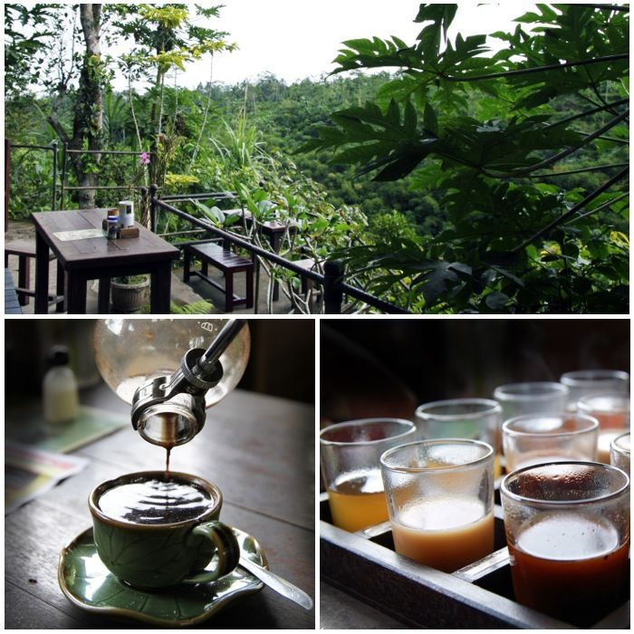 Kopi Luwak coffee tasting past Ubud in Bali. Visiting the plantation and trying the coffees is a must