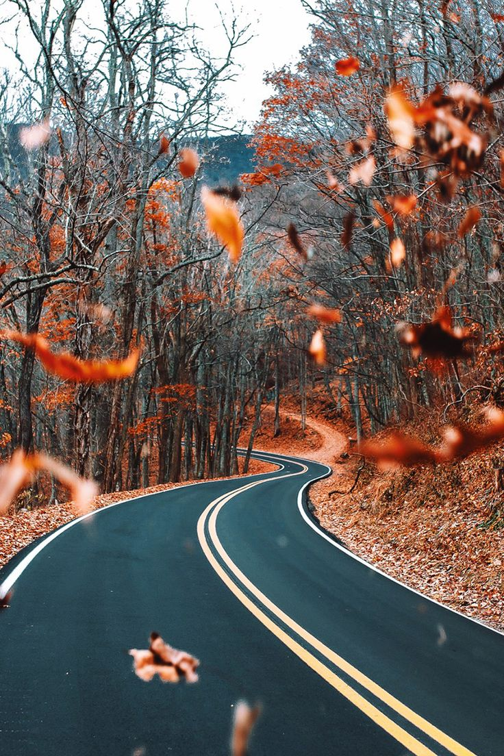 Iphone wallpaper tumblr fall - Falling Leaves On A Fall Road