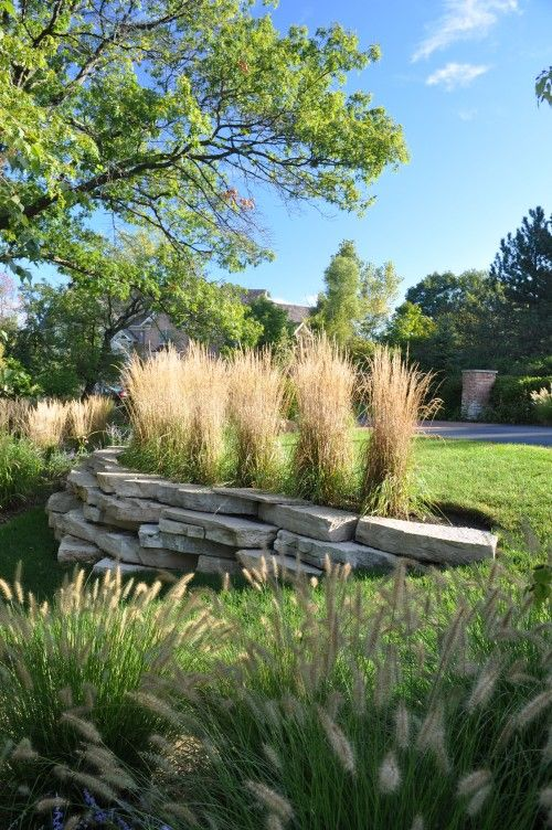 17 best images about landscaping on pinterest gardens for Tall ornamental grasses for screening