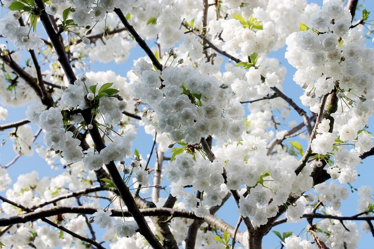 Flowers Spring Blossom   #spring #flowers #plants #photography