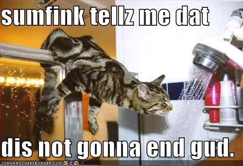 #cats #kittens #animals #funny: Funny Cat Photo, Kitty Cat, Funny Pictures, Bengal Cat, Pet, Shower Time, Drinks, Kittycat, Animal