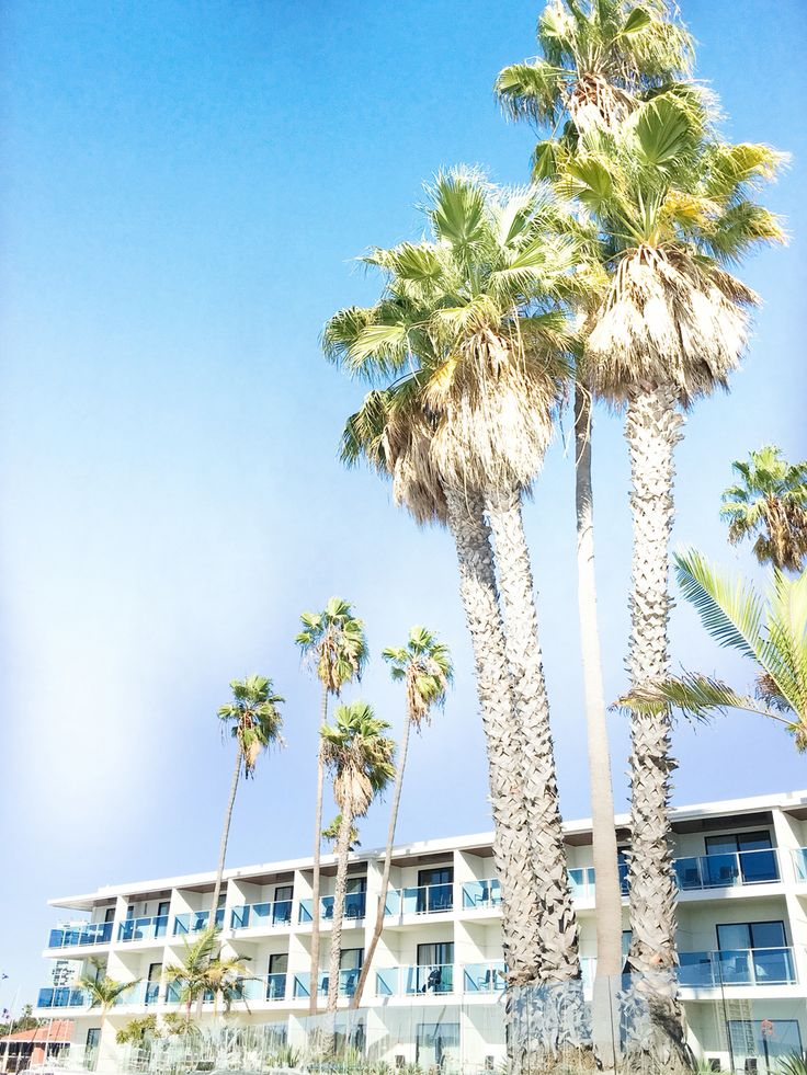 Perfect Palm trees in Los Angeles