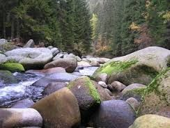 šumava cesta lesem - Hledat Googlem
