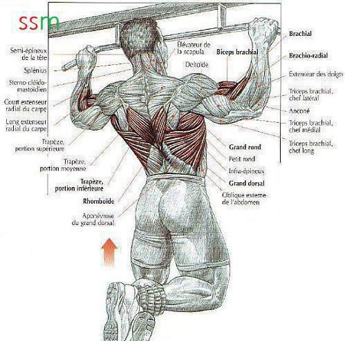chin muscles diagram 2007 f350 fuse panel #back,lat,biceps #workout #gymaholic | bodybuilding & fitness motivation pinterest biceps ...