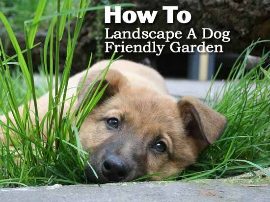 How To Landscape A Dog Friendly Garden.