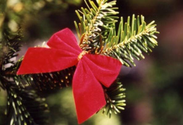 DIY Homemade Christmas Tree Preservative Recipes ...