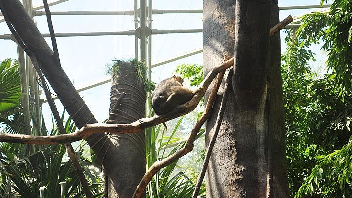 Gradina zoologica din Praga  O zi la Gradina zoologica din Praga - galerie foto.  Vezi mai multe poze pe www.ghiduri-turistice.info