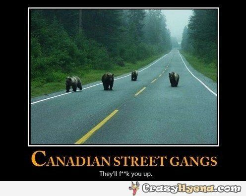 Bears in Canada | Funny Pictures, Quotes, Photos, Pics, Images. Free Humorous Videos and Facebook Covers