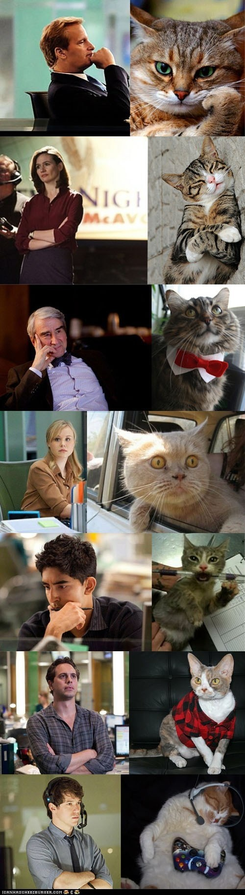 "The Cast of ""The Newsroom"" as Portrayed by Cats. As expected Will is so cute!! lol"