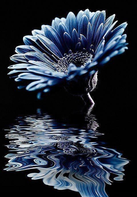 Épinglé par Bobbie Andrews Whelihan sur Flowers Peinture