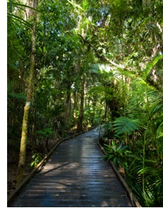 daintree national park, queensland, australia