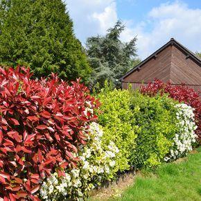 Bunte Hecke Garten Pinterest Garten Garten Hecken Und Pflanzen