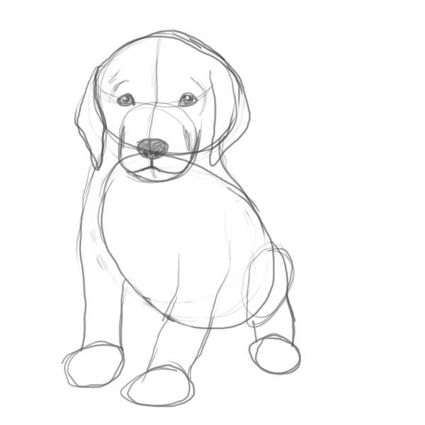 Are You Looking For A Tutorial On How To Draw A Puppy Look No