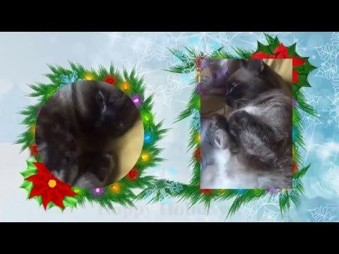 My beauty sleepy cat on Christmas day - YouTube