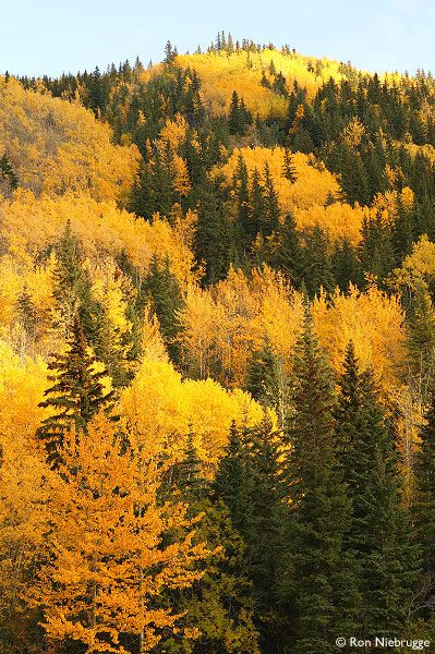Fall along the Smoky River near Grande Cache  Bighorn Route Highway 40, Alberta, Canada