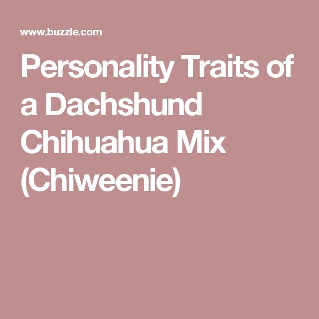 Personality Traits of a Dachshund Chihuahua Mix (Chiweenie)
