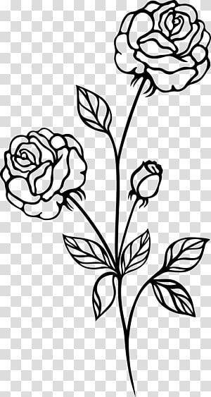 Black Rose Black And White Botanical Flowers Transparent Background Png Clipar Backgr Black And White Roses Sunflower Black And White Flower Line Drawings