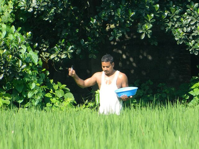 The Family Farming That Could Be Example To Others:D. The photo shows the way of using fertilizer in the rice fields. The farmer believes that he must grow the rice he consume himself. So, from this year he artificially created the required field for the rice. & I couldn't stop myself to take photo of him. Photographer : Saroj Khatiwada