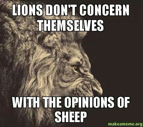 Lion Sheep Quote: Lions Don't Concern Themselves With The Opinions Of Sheep