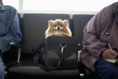Pomeranian dog in travel bag - Terry Husebye/The Image Bank/Getty ImagesTraveling with your dog can be loads of fun if you make all the right arrangements. However, poor planning can really ruin the vacation for everyone. If you have decided that your furry companion should be part of your trip, let the planning begin.