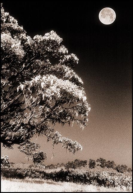 Mt. Kenya, Kenya