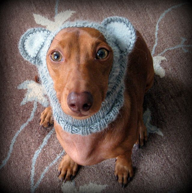 Knitting Pattern Hat With Dog Ears : 17 Best images about Knitting for DOGS on Pinterest For ...